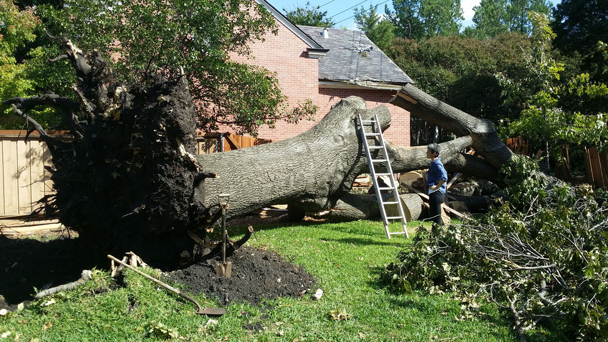 Why Is It Important To Hire Professional Tree Removal Services?