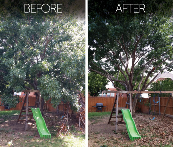 tree-trimming-before-and-after-north-dallas-tree